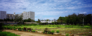 Food security through urban agriculture