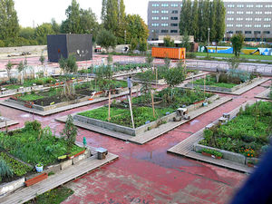 Growth of small scale (peri) urban agriculture in Ghent, Belgium