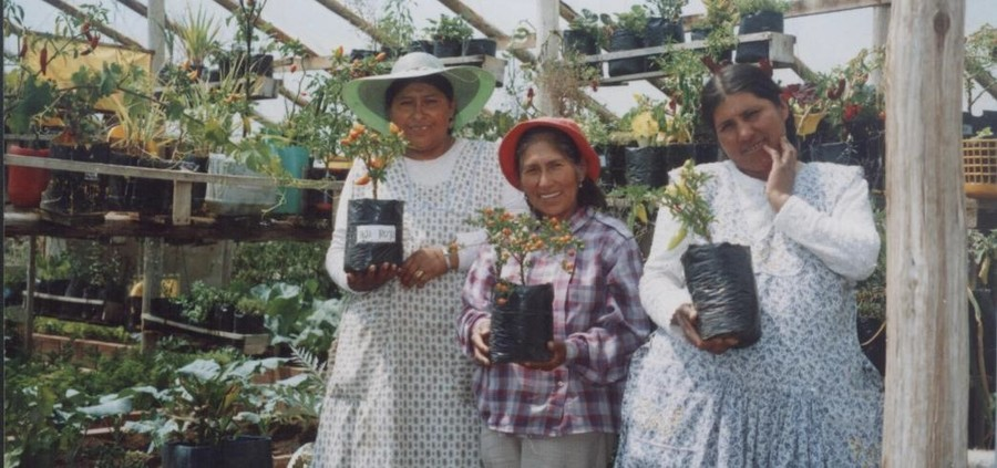 Strengthening the Women of El Alto (Bolivia) through Cultivation of Agricultural Products, El Alto, Bolivia