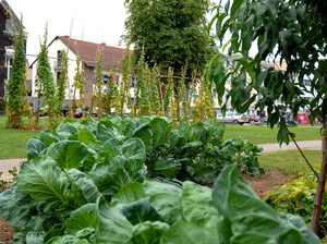 Public vegetable beds in a residential area