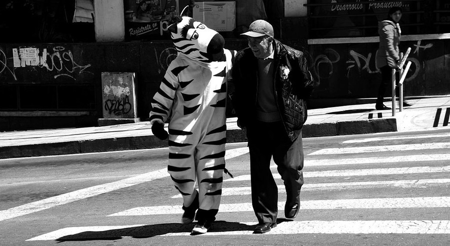 La Paz Road Zebras: A Citizen Culture Project, La Paz, Bolivia