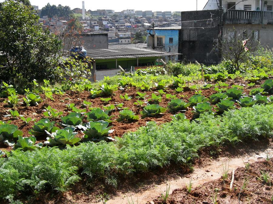 Brasil Sao Paulo Community Gardens